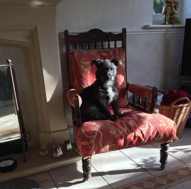 Bella-Bardog