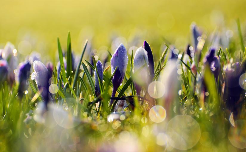 Spring Repertoire Challenge